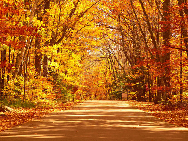 The  Best Places In Australia To See Autumn Colours Qantas Travel Insider