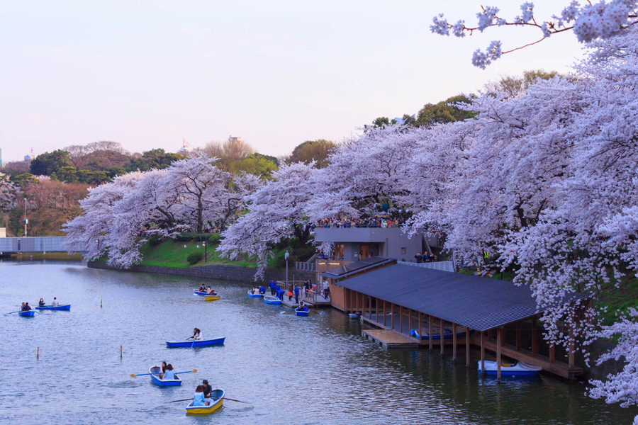Where To See Cherry Blossoms In Japan Qantas Travel Insider