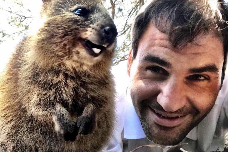 Say Quokka The Best Celebrity Selfies With Wa S Furry